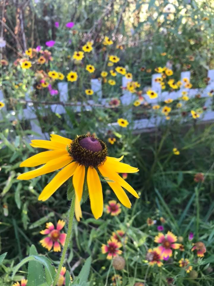 June 2019 Yard of the Month winning photos with pollinator plants 8